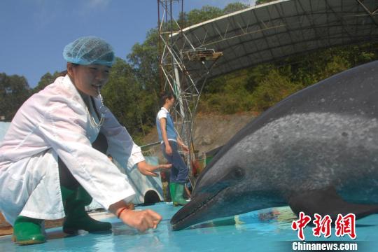 """深圳野生动物园海豚再当""""医生""""训练自闭症患儿"""