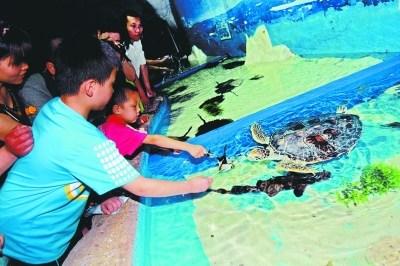 东湖海洋世界里,小朋友喂海龟吃粽子